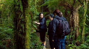 Guided exploration to learn key species and understand the bush environment