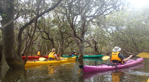 Mangrove forest kayaking experience. Marine studies trip with Learning Journeys.