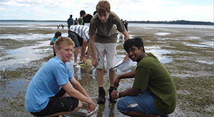 Mud flat ecology students investigating whelk behaviour.