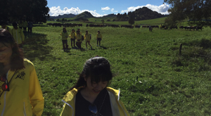 New Zealand dairy farm visit. Sustainable use of an environment.