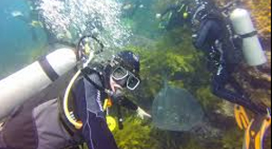 Diving at Poor Knights Marine Reserve. Marine Studies with Learning Journeys.